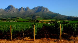 Vinhedos em Stellenbosch.
